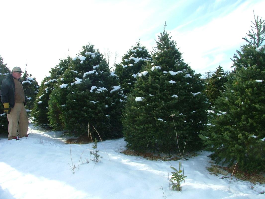 Pine Hill Farms Christmas Tree Farm Home